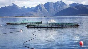 Salmon safari in Lofoten